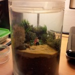 A terrarium I made for my wife for Valentine's Day